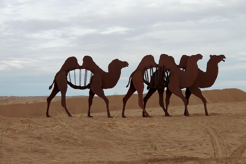 骆驼队万博体育彩票官网app图片